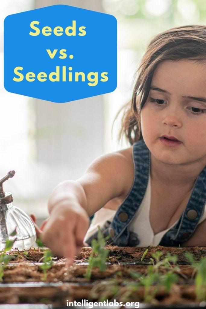indoor garden ideas - seeds vs seedlings