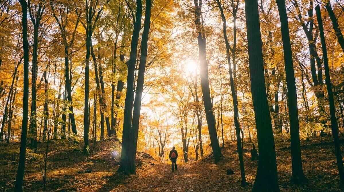 Go hiking and take nature walks to enjoy the gorgeous autumn scenery