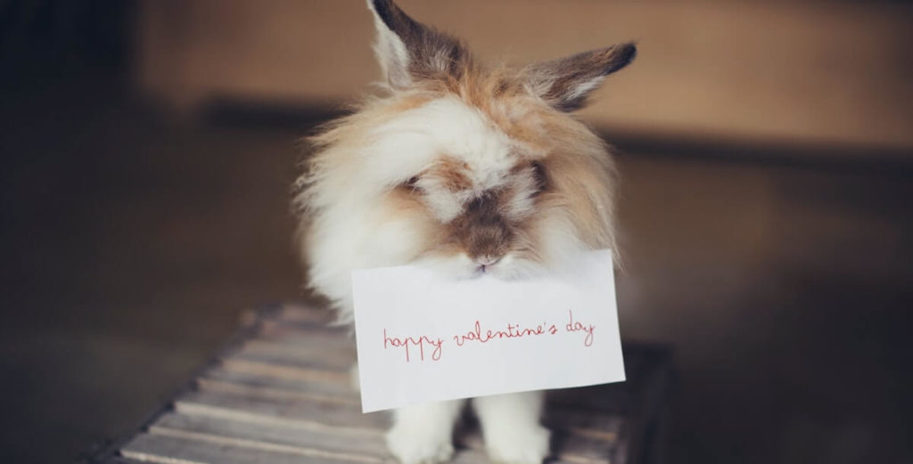 featured image for article on healthy valentine's day gift ideas